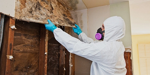 Mold removal, mold remediation, mold and mildew specialist, Toronto
