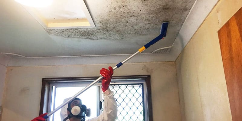 mold remediation Toronto, mold removal, restoration companies, mold removal and remediation, property damage
